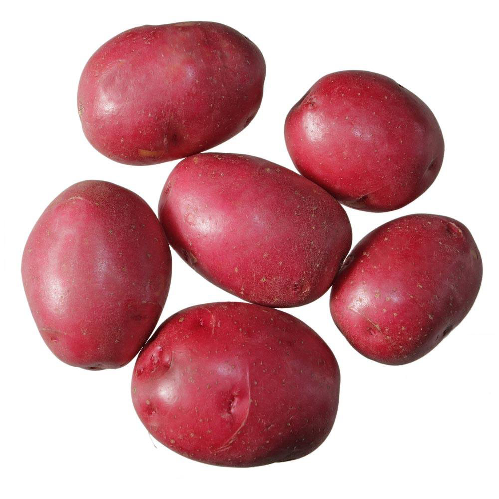 Desiree Potato