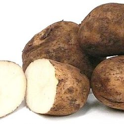 Sebago Potato